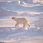 Expeditie Spitsbergen schip landing Meander